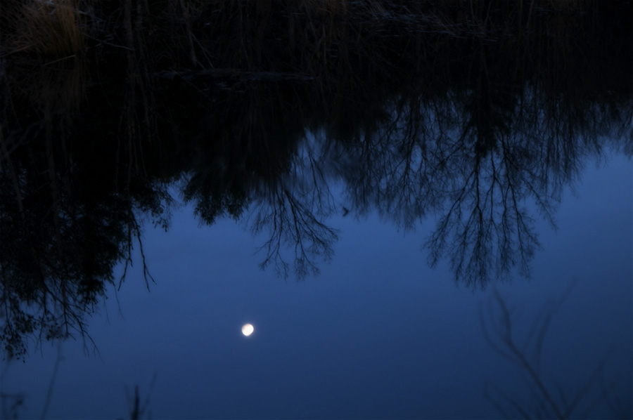 moon in swamp